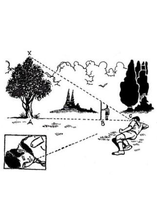 menaksir pohon